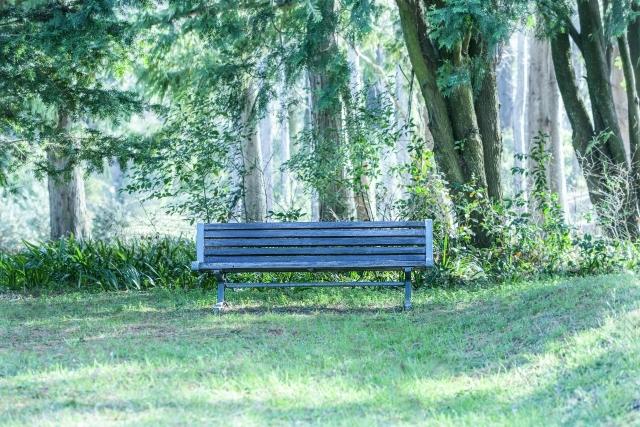 どんぐりの木が植えていない公園例